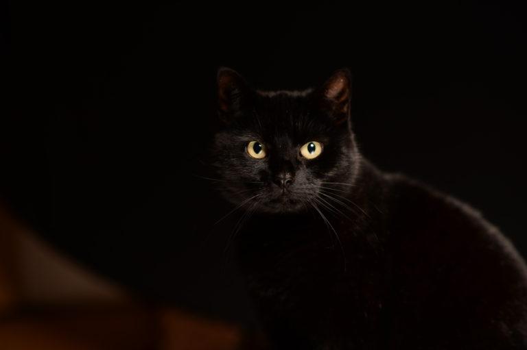 černá kočka ve tmě