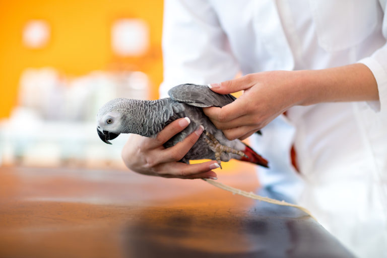 Žako u veterináře