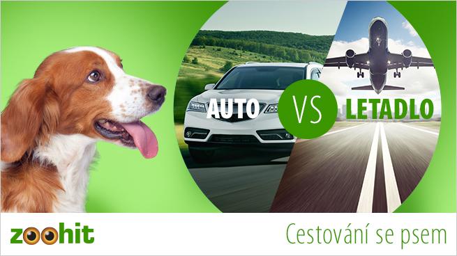 Cestování se psem - autem nebo letadlem?