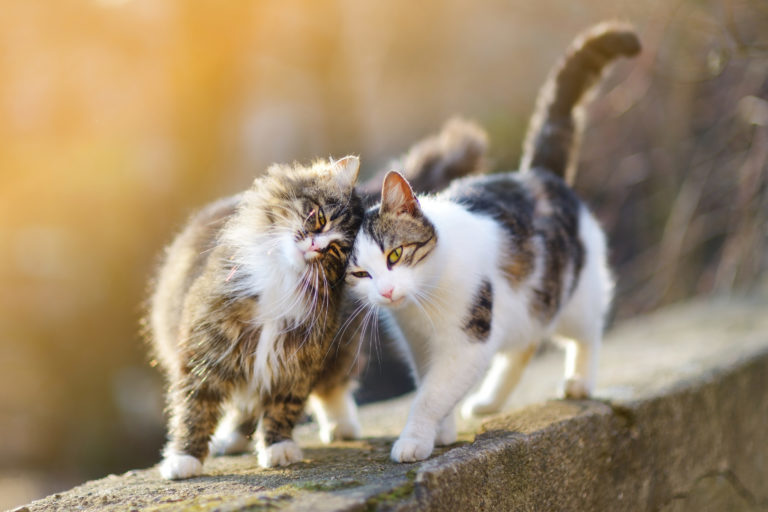 Dvě kočky spolu