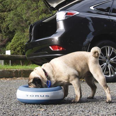 pes pije z fontánky pro psy