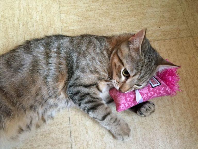 Kočka ležící na růžovém polštářku Catnap