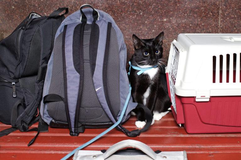 Kočka s přepravkou a cestovními taškami