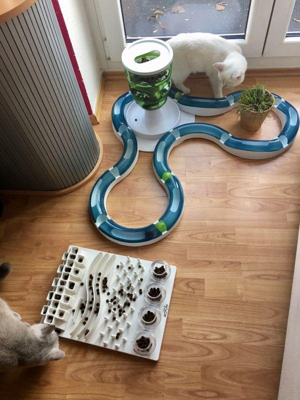 Bílá kočka si hraje s inteligentní hračkou
