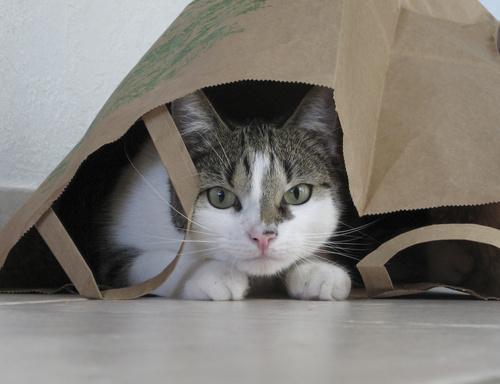 Kočka v papírové tašce