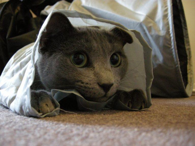 Kočka v tunelu agility