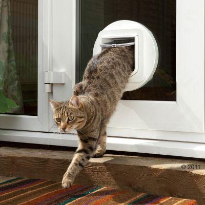 Kočka vylézá z dvířek pro kočky