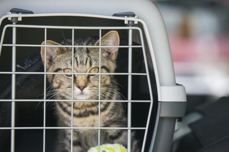 Kočka zavřená v přepravce