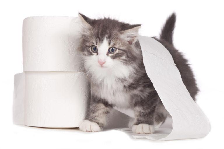 Kotě se dvěmi roličkami toaletního papíru
