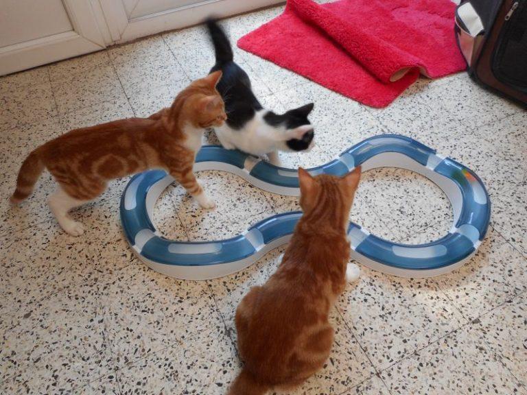 Tři kočky si hrají s inteligentní hračkou