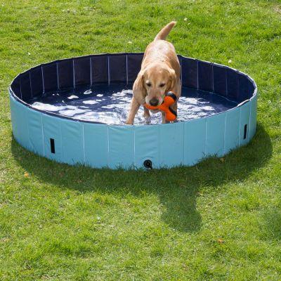 Retrívr v bazénu pro psy
