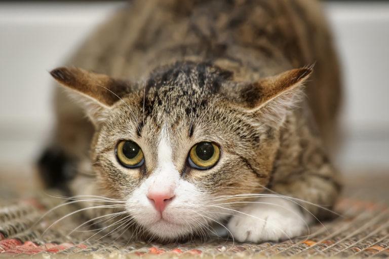 Těsný kočička vůbec