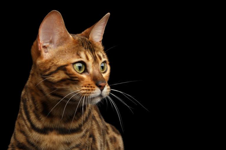 kočka na černém pozadí