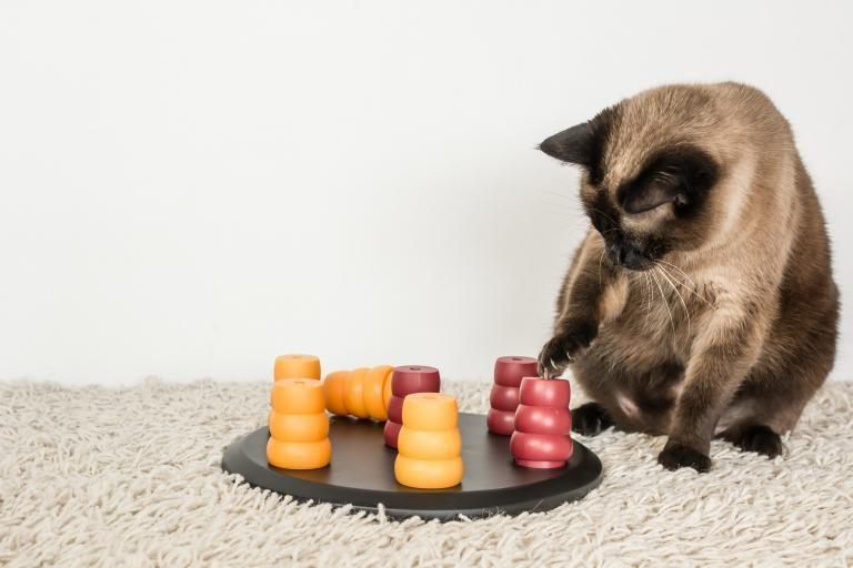 kočka s inteligentní hračkou