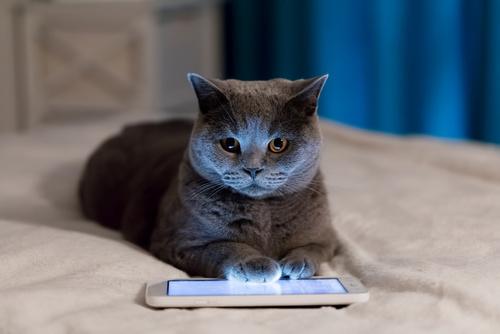 kočka s tabletem
