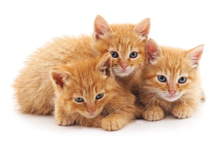 tři rezavá koťátka