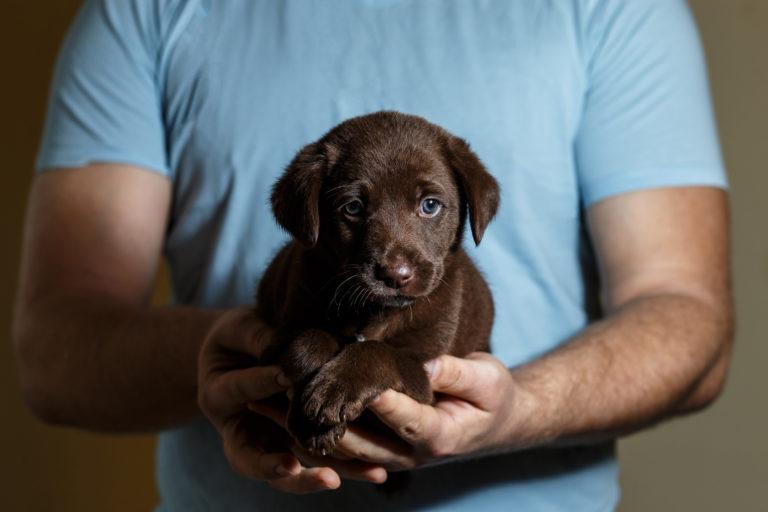 malé štěně v náručí