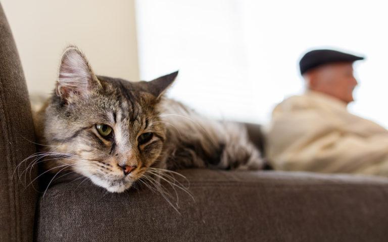 odpočívající starší kočka