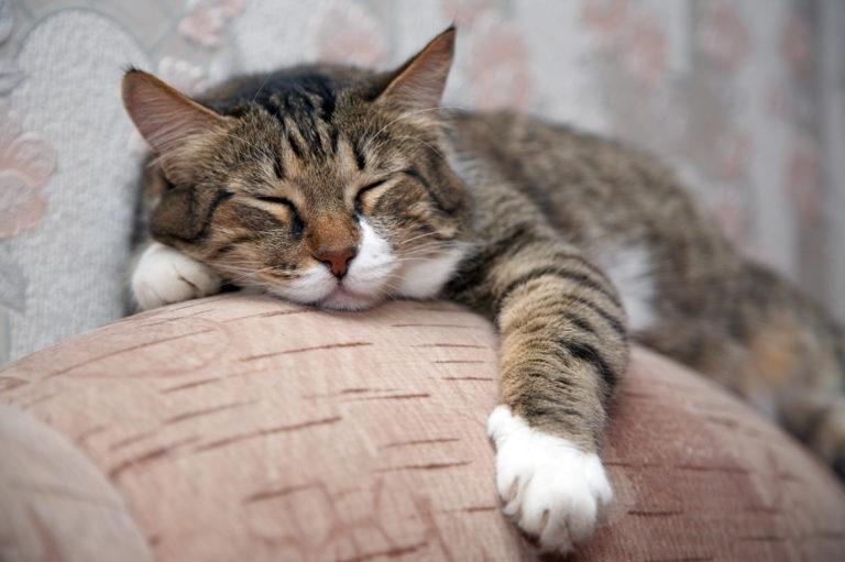 spící mourovatá kočka