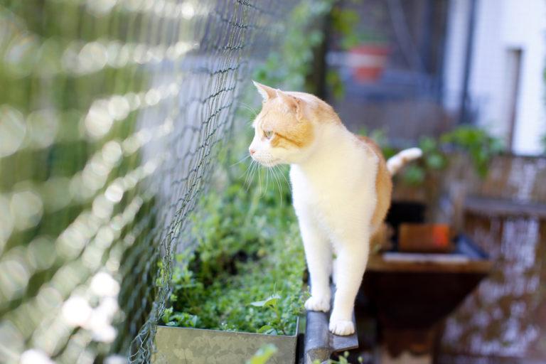 Kočka na balkonu se sítí