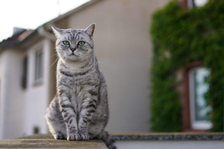 Vysoce kvalitní dospívající kočička