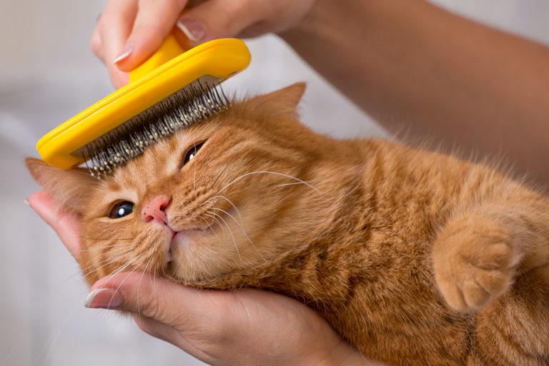 česání kočky