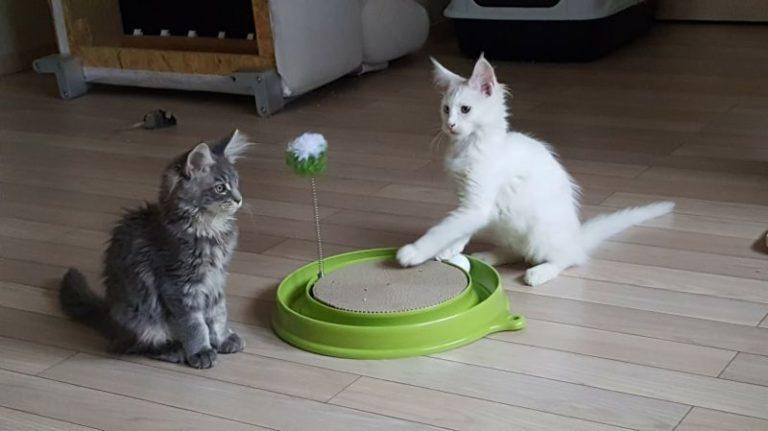 Dvě kočky s inteligentní hračkou