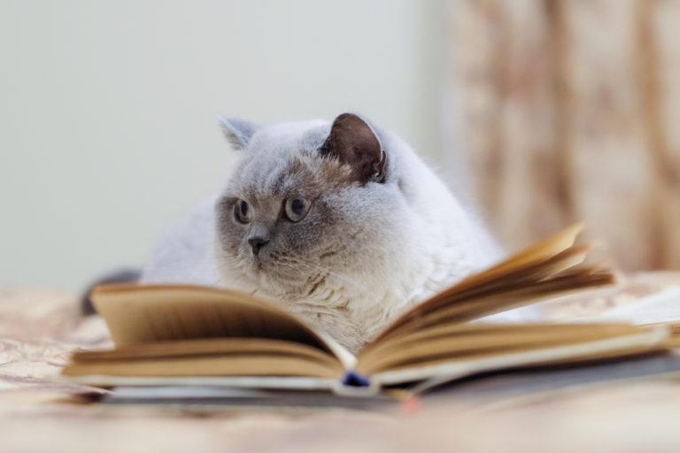Kočka si vybírá v knize jméno