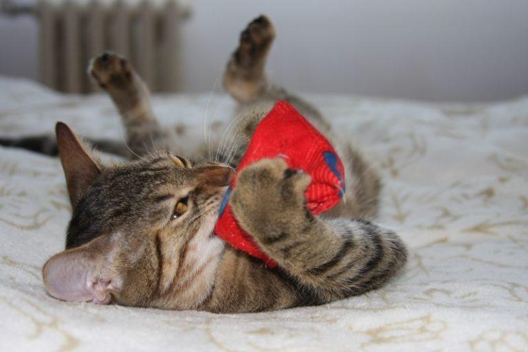 Kočka si hraje s polštářkem