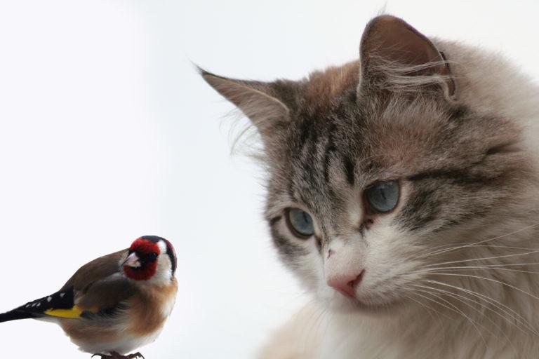 Kočka sleduje ptáčka