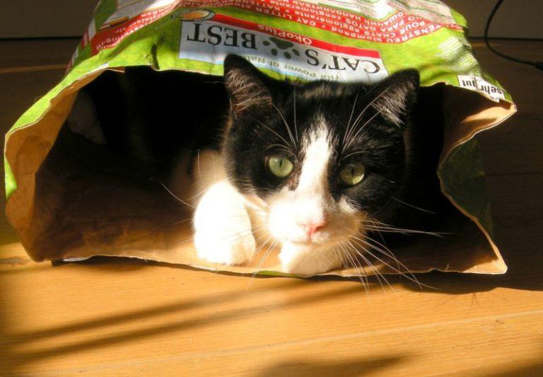 Velká boky chlupatá kočička