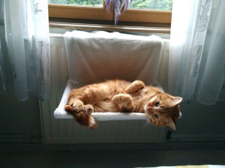 Kotě leží na odpočivadle u topení