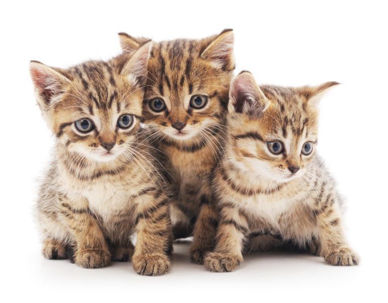 Tři mourovatá koťátka