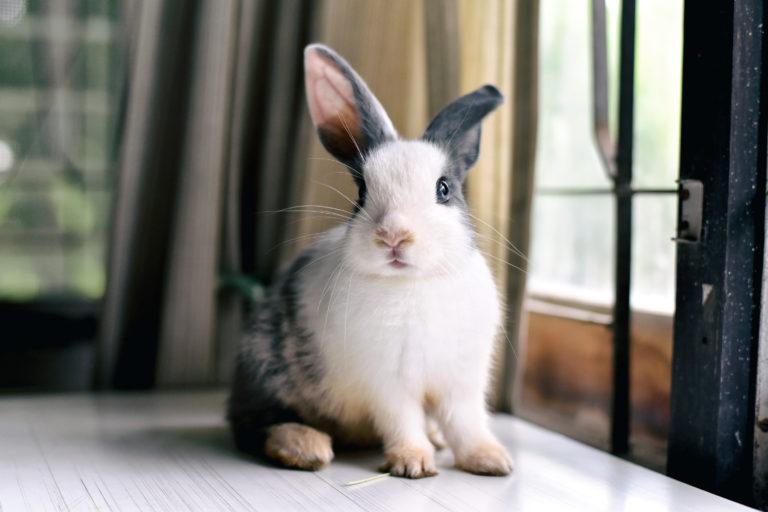 barevný králíček u okna