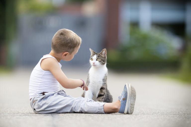 chlapec sedí s kočkou