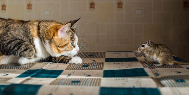 kočka a pískomil