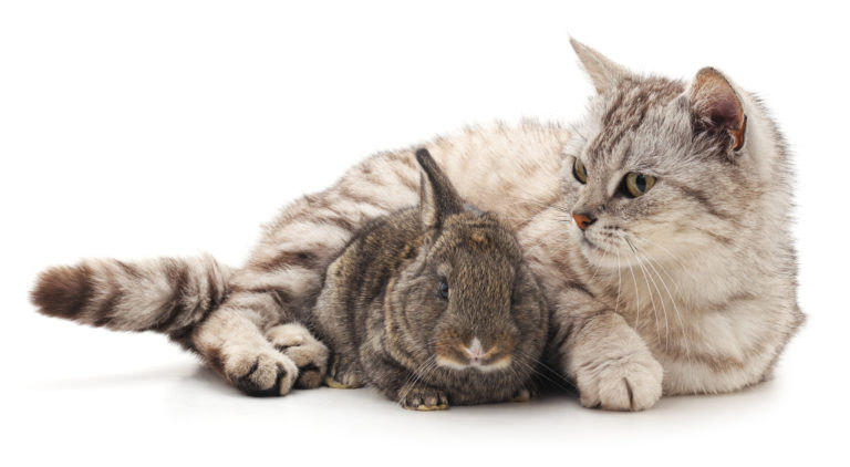 kočka s králíkem
