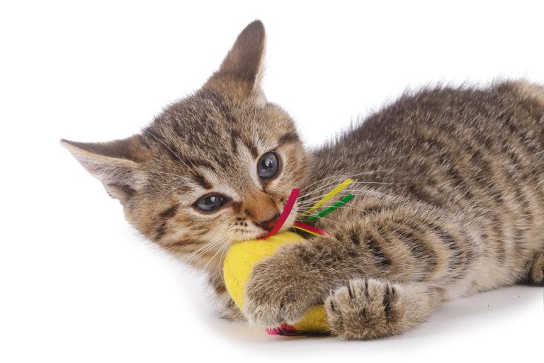 Mokrá kočička chlupatá