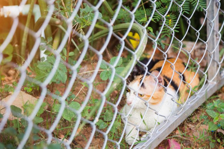 kočka za plotem