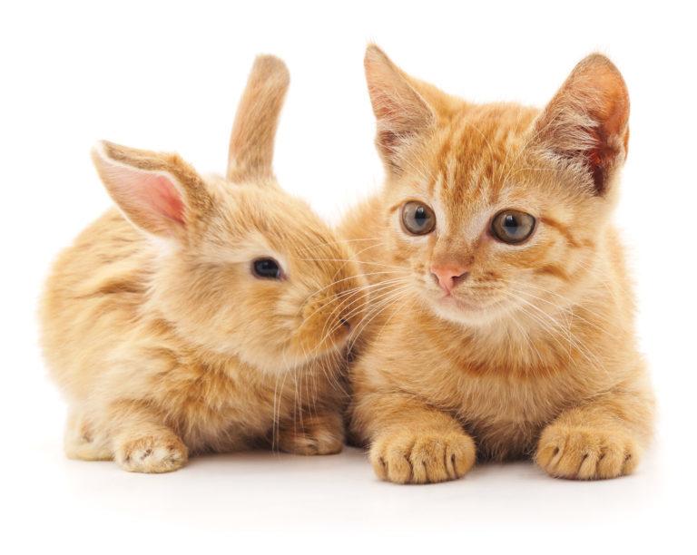 Velká kořist a kočička pic