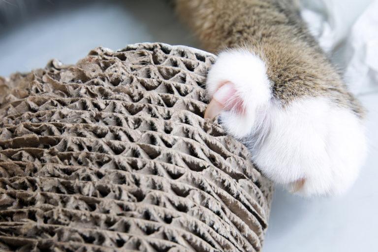 tlapka kočky s drápkem