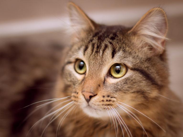 Jak porozumět řeči koček