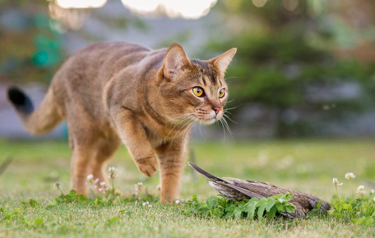 Kočka ulovila ptáka