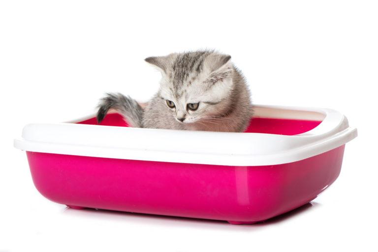 Kotě v růžové toaletě pro kočky
