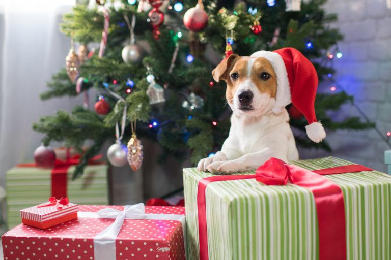 Pes s čepičkou santy u vánočního stromku s dárky