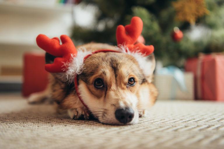 Pes se sobím kostýmem pod vánočním stromkem