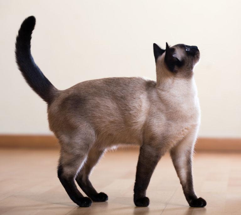 Jak se ti dělá vaše kočička stříkat