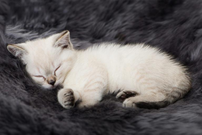 spící koťátko
