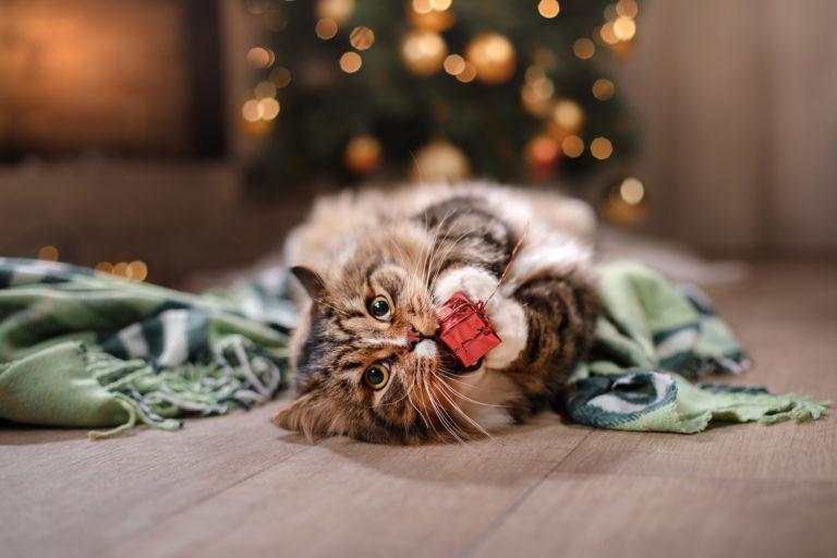 kočka si hraje s vánočním dárkem