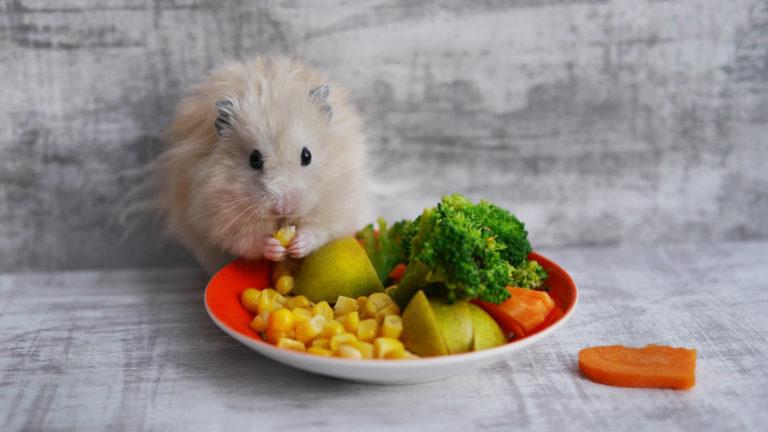 morče s čerstvým krmivem